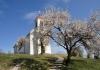 Siker: pécsi mandulafa lett az év fája