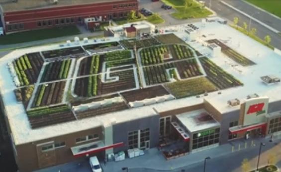 Íme a jövő: szupermarket tetején termeli a zöldségeket egy kanadai lánc